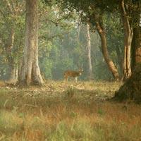 Jabalpur - Kanha