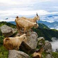 Pathankot - Dharamsala - Dalhousie