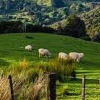 Auckland - Waitomo - Rotorua - Napier - Wellington