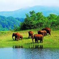 Athirappilly - Munnar - Thekkady - Kumarakom - Cochin