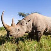 Nairobi - Masai Mara - Lake Victoria - Serengeti - Ngorongoro