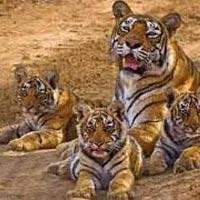 Delhi - Bharatpur - Sariska - Ranthambore - Jaipur - Delhi