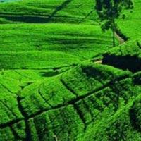 Negombo - Sigiriya - Dhambulla - Kandy - Mathale