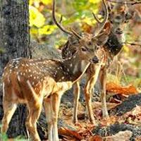 Nagpur - Jabalpur - Pench National Park