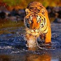 Jaipur - Ranthambore National Park - Jaipur