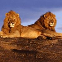 Amboseli - Naivasha - Maasai Mara - Isebania - Serengeti National Park - Ngorongoro Crater - Manyara - Nairobi