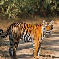 Khajuraho - Bandhavgarh National Park - Kanha National Park - Jabalpur