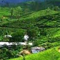 Gangtok - Kalimpong - Darjeeling