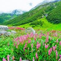 Delhi - Rishikesh - Nandprayag - Pipelkoti - Auli - Buggial - Govindahat - Gangria - Valley of Flowers - Augustmuni - Rishikesh
