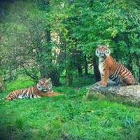Delhi - Nagpur - Kanha - Bandhavgarh - Agra - Bharatpur - Ranthambhore - Jaipur