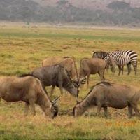 Lake Naivasha - Maasai Mara