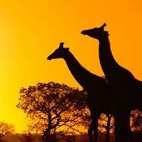 Kruger National Park - Johannesburg - Knysna - Cape Town - Seychelles