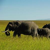 Maasai Mara - Nakuru - Amboseli - Manyara - Ngorongoro - Serengeti - Arusha