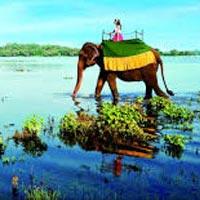 Negambo - Anuradhapura -  Sigiriya - Wildlife Safari - Dambulla - Matale - Kandy - Pinnawala - Nuwara Eliya - Colombo
