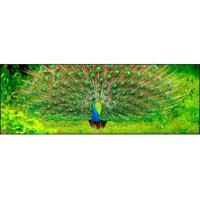 Sigiriya - Traditional village - Dambulla - Kandy - Pinnawala - Peradeniya - Nuwara Eliya - Horton's plains - Ella waterfalls - Yala National Park - Galle - Beach stay