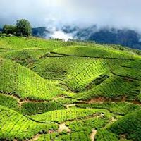 Cochin - Munnar - Thekkady -  Alleppey - Kovalam