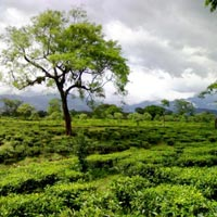 Jaldapara Wild Life Sanctuary - Alipurduar