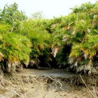 Pakhiralya - Dayapur Island – Sarakkhali – Sundarkhali – Sajnekhali Tiger Project – Sudhanyakhali watch – Godkhali