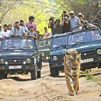 Delhi - Sariska - Jaipur - Sawai Madhopur - Ranthambore National Park - Bharatpur - Agra - Delhi