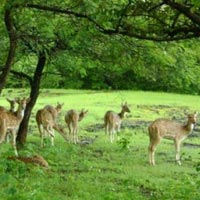 Junagadh - Gir National Park