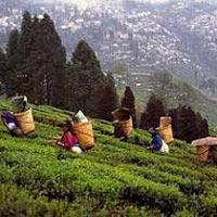 Kalimpong - Darjeeling - Gangtok