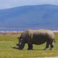 Nairobi City - Amboseli National Park - Mount Kilimanjaro - Amboseli Lake Nakura - Masai