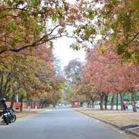 Chandigarh - Shimla - Kufri - Narkanda - Rampur