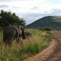 Aberdare National Park - Lake Nakuru - Maasai Mara - Amboseli National Park