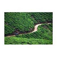 Cochin - Munnar - Alleppey - Thekkady - Kumarakom