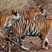 Khajuraho - Bandhavgarh National Park - Kanha National Park - Pench National Park - Nagpur