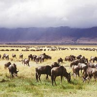 Ngorongoro - Lake Manyara - Arusha