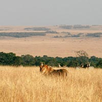 Ngutuni Game Sanctuary - Taita Hills Game Sanctuary - Tsavo West National Park - Amboseli National Park
