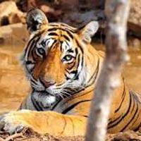 Jaipur - Ranthambore - Agra