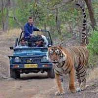 Jaipur - Ranthambore National tiger park - Bharatpur bird sanctuary - Agra