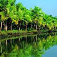 Munnar - Thekkady - Alleppey - Kumarakom