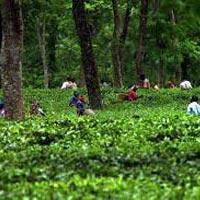 Kolkata - Jorhat - Kaziranga National Park - Bogivil River Ghat - Nagaland - Longwah - Dibrugarh City