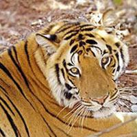 Jaipur - Sariska - Bharatpur - Ranthambore