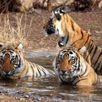 Delhi - Alwar - Sariska National Park