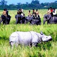 Kolkata - Guwahati - Manas - Nameri National Park - Kaziranga - Majuli - Jorhat - Gibbon - Dibrugarh - Deban - Hornbill - Mauloung - Wakro - Roing - Dibrugarh - Sundarbans