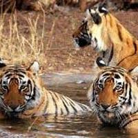 Pachmarhi - Bandhavgarh - Khajuraho - Bhedaghat - Kanha