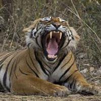 New Delhi - Sariska National Park - Jaipur - Ranthambore - Bhartpur - Fatehpur Sikri - Agra