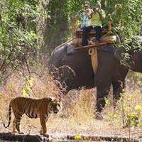 Bandhavgarh National Park - Umaria