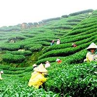 Darjeeling - Pelling - Gangtok