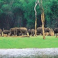 Cochin - Munnar - Thekkady - Alleppey - Kovalam - Trivandrum