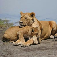 Tarangire national Park - Ngorongoro Crater