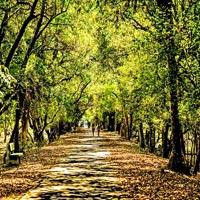 Delhi - Jaipur - Sawai Madhopur (Ranthambore) - Udaipur - Jaisalmer - Jodhpur - Bharatpur