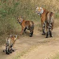 Delhi - Agra - Bharatpur - Ranthambore - Jaipur - Sariska