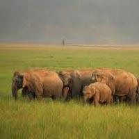 Delhi - Nainital - Jim Corbett - Kausani - Ranikhet - Mussoorie - Rishikesh - Haridwar - Chandigarh - Shimla - Manali - Delhi