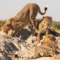 Chobe - Moremi - Okavango