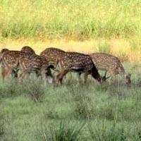Mandla - Kanha National Park